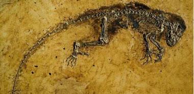 PLoS ONE:发现4700万年前人猿共同祖先