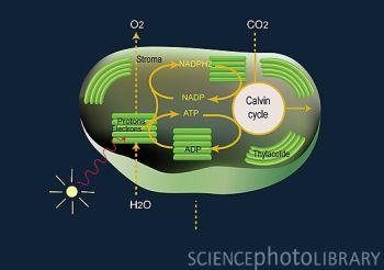Science:新催化剂可提高人工光合作用效率