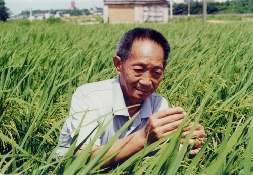 科学应对粮食短缺三法:昆虫、人造肉、光合作用