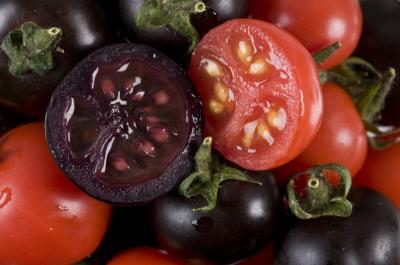 Nature-Biotechnology:科学家创造出紫色西红柿可抗肿瘤