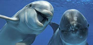 "Comparative Medicine:海豚""节食基因""有助于人类二型糖尿病研究"