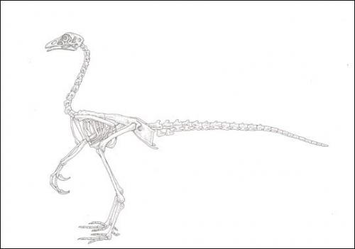 """几年前科学界曾提出过的""""恐龙鸡"""""""