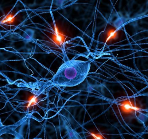 """Cell Stem Cell:我科学家证明细胞移植或可治疗""""舞蹈病"""""""