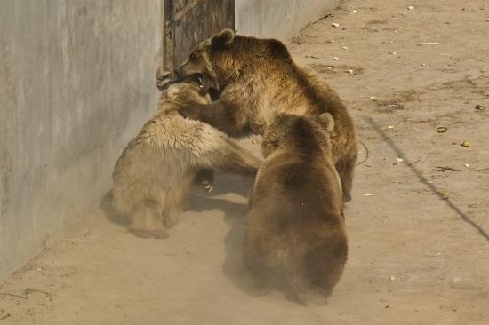 发现动物公园水坑