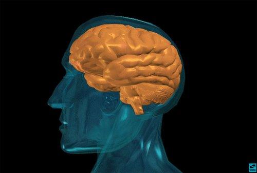 PNAS:美从鼠脑结构解释青少年为何好冒险