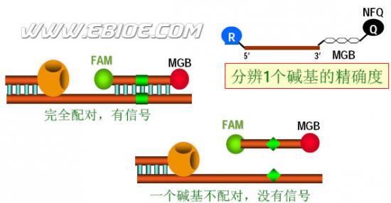 荧光pcr原理及应用