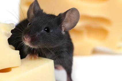Science:低碳水化合物、高蛋白的饮食能预防癌症和减缓癌细胞的生长