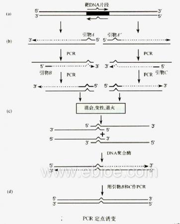 基因操作的主要技术原理 课件