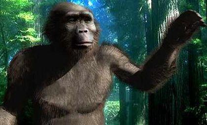 "《Science》:化石研究表明人类远古近亲曾""妻妾成群"""