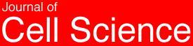 羟自由基激活的钾离子通道参与胁迫诱导的细胞凋亡