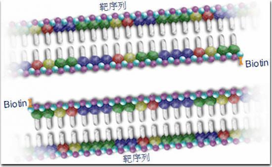 q-pcr(定量聚合酶链反应)测定技术及其临床应用-方法
