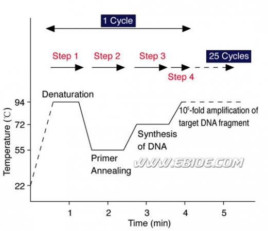 pcr扩增16srdna实验原理,材料和操作步骤以及常见问题