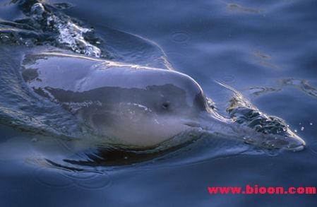 2007年度十大人为灾难:全球变暖与长江白鳍豚灭绝居前