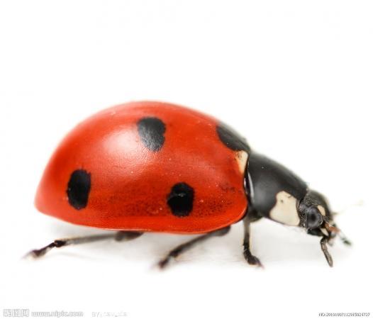 甲虫卡通简笔画彩色