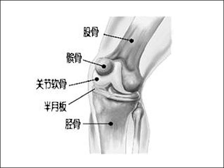 特立帕肽可用于治疗致损性关节炎