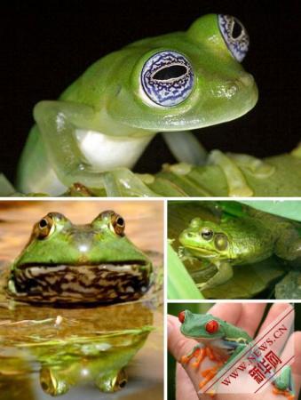 盘点十种奇特的绿色动物