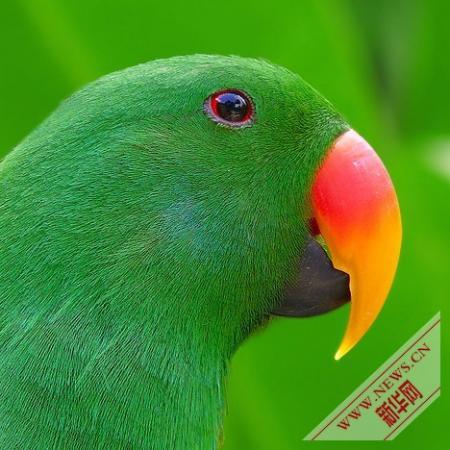 盘点十种奇特的绿色动物-观察-生物探索