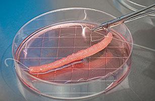 在实验室中培育人体身体器官
