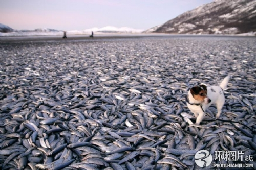 《2012》式死亡 :全球动物集体神秘死亡事件