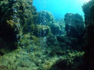 ScienceDaily:海洋酸化引起珊瑚礁生态系统多样性和应变性的降低