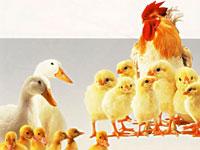 PNAS:发现保护动物抵抗禽流感新蛋白
