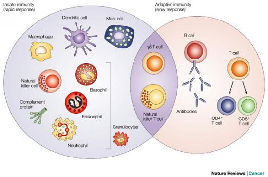 Cell:抗病毒先天性免疫研究获进展