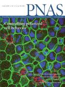 PNAS:细胞生长接触抑制与癌症发生有关