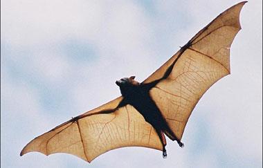 Current Biology:蝙蝠与鲸及海豚趋同进化研究