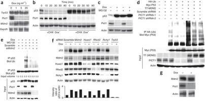 """nature:研究发现阻碍肌体抑制癌症的蛋白质""""路障"""""""