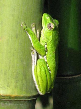 树蛙是什么样的