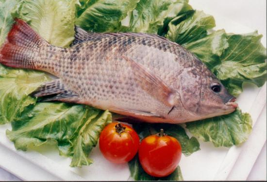 最新研究发现鱼中铅含量对心脏无害