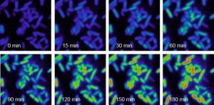 Science:活细胞代谢成像新方法