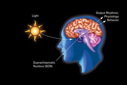 Nature:研究发现连接生物钟与糖代谢系统关键环节