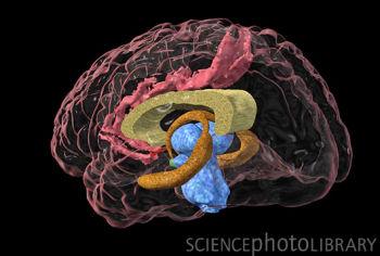PNAS:自传体记忆背后的大脑细胞