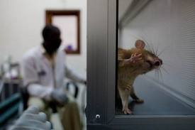 "Brain:老鼠部分脑神经""自我修复""机制揭开"