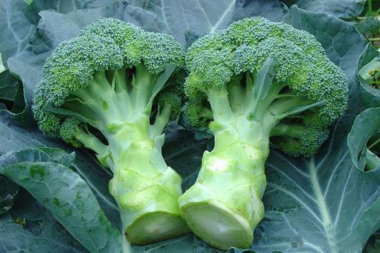 多吃蔬菜可抗癌 或许发现其机理