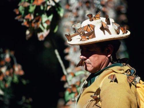 国家地理120年九大发现:墨西哥发现王蝶伊甸园