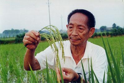 袁隆平:超级杂交水稻要和有机生产相结合