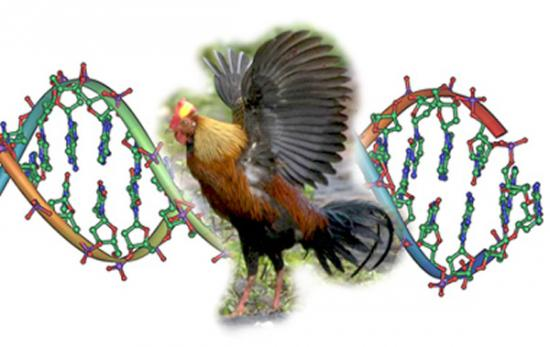 β角蛋白进化是支持鸟类飞行的重要因素
