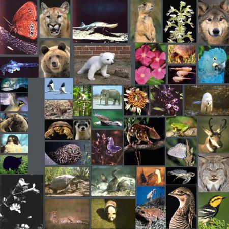 最新估计物种数量880万 人类只发现190多万