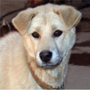 基因研究证实狗的祖先来自东亚南部