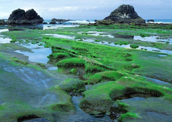 苔藓中的地衣红染料可防治阿尔茨海默病