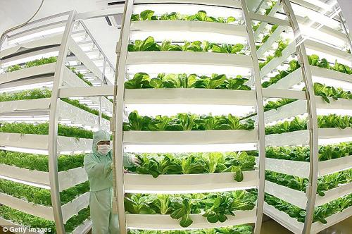 未来农业新希望——植物工厂