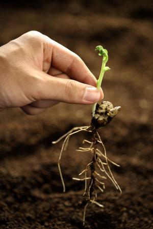 增温施肥总体促进幼苗生物量积累