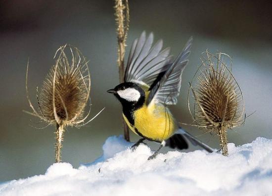 噪音污染破坏鸟类歌声的吸引力