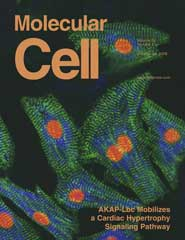 Molecular Cell:AKAP蛋白对心肌肥大的作用
