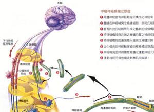 Biomaterials:神经再生研究新进展