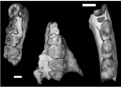 人类学家在西德克萨斯发现新的灵长类动物化石