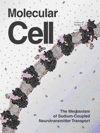 《分子细胞》:神经递质转运机制的新发现