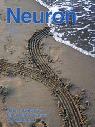 Neuron:转录因子Nkx2的开关功能